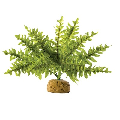Exo-Terra Boston Fern