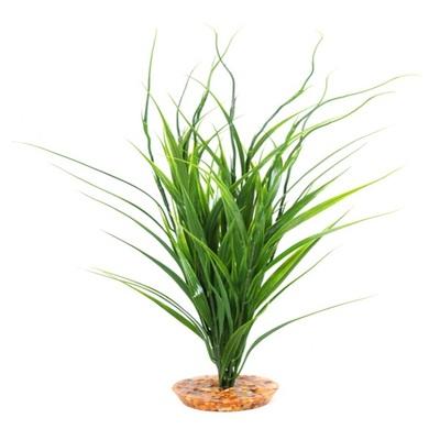 Komodo Sea Grass