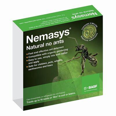 Ant Nematodes 16 Nests