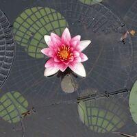 Image of Net Float, Floating Pond Protection