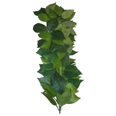 Komodo Ficus Hanging Vine