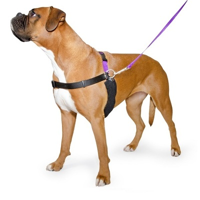 Ancol PURE Dog Listeners & Training Harness & Lead Set