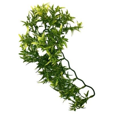 Komodo Croton Plant