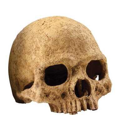 Exo-Terra Skulls Hide Out